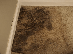 carpet mold example