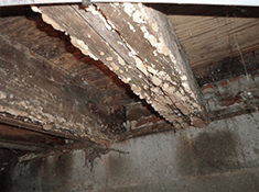 Basement Mold And Crawlspace Mold Causes And Removal