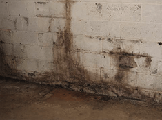detect mold in basement or crawlspace