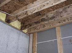 detect mold in ceiling or under home