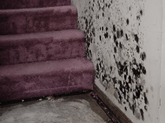detect mold in carpet and on walls