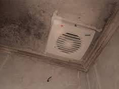 mold on bathroom ceiling or walls - Mold Bathroom Ceiling