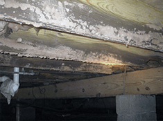mold on floor joist how to remove mold from wood