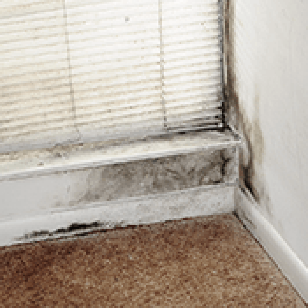 Mold On Walls: Our Guide To Identification And Removal