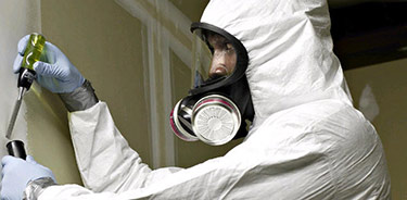 Toxic Mold 101 Methods And Services For Getting Rid Of In The Home