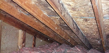 black mold removal in the attic