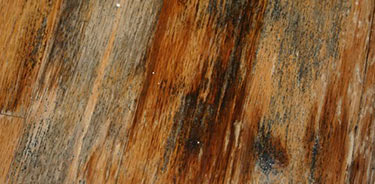 Black Mold Removal On Wood