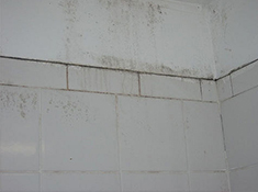 how to remove remove mold from grout and tile close up