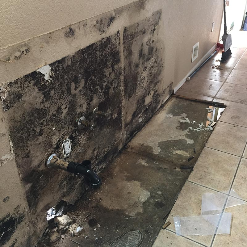 black mold pictures on walls and sub-flooring behind kitchen sink