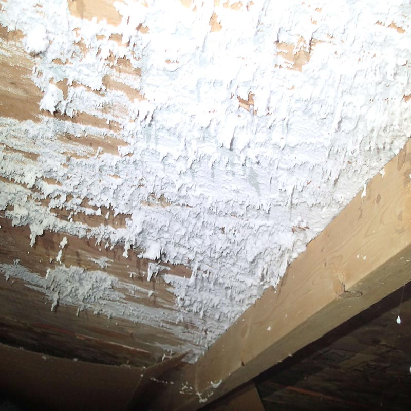 black mold pictures - mold under the home