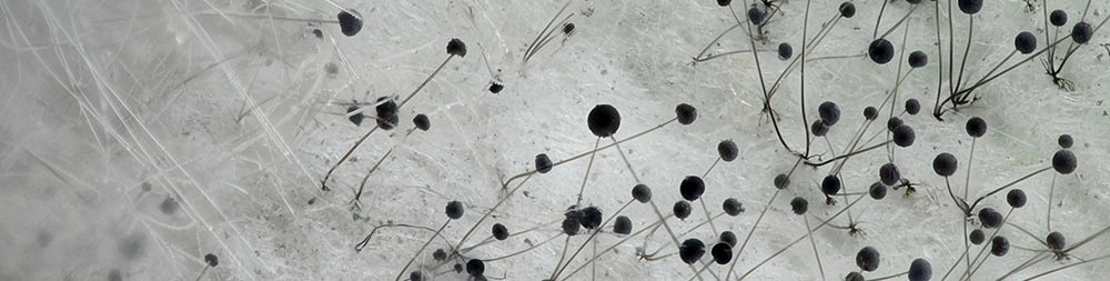 image of white mold